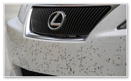 محلول پاک کننده حشرات از بدنه ماشین